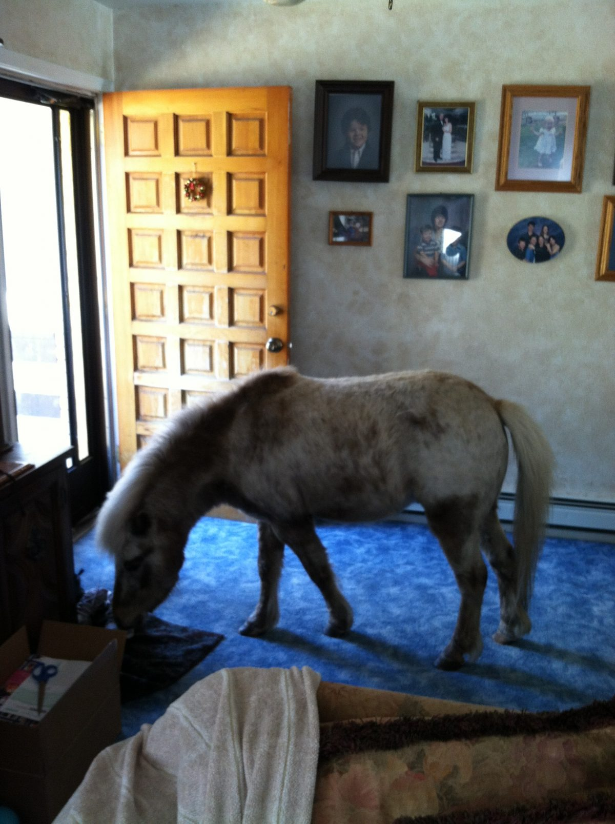 A Horse in the House—A Devotional for Pet Lovers