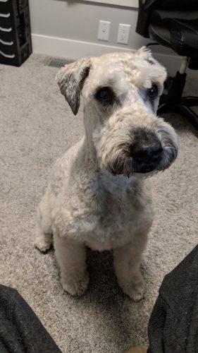 Pilot, Sheila's Dog.